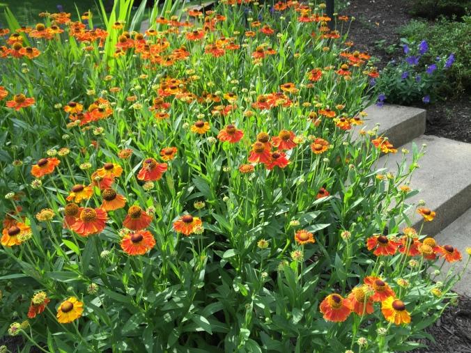 Flowers casa Stewarti