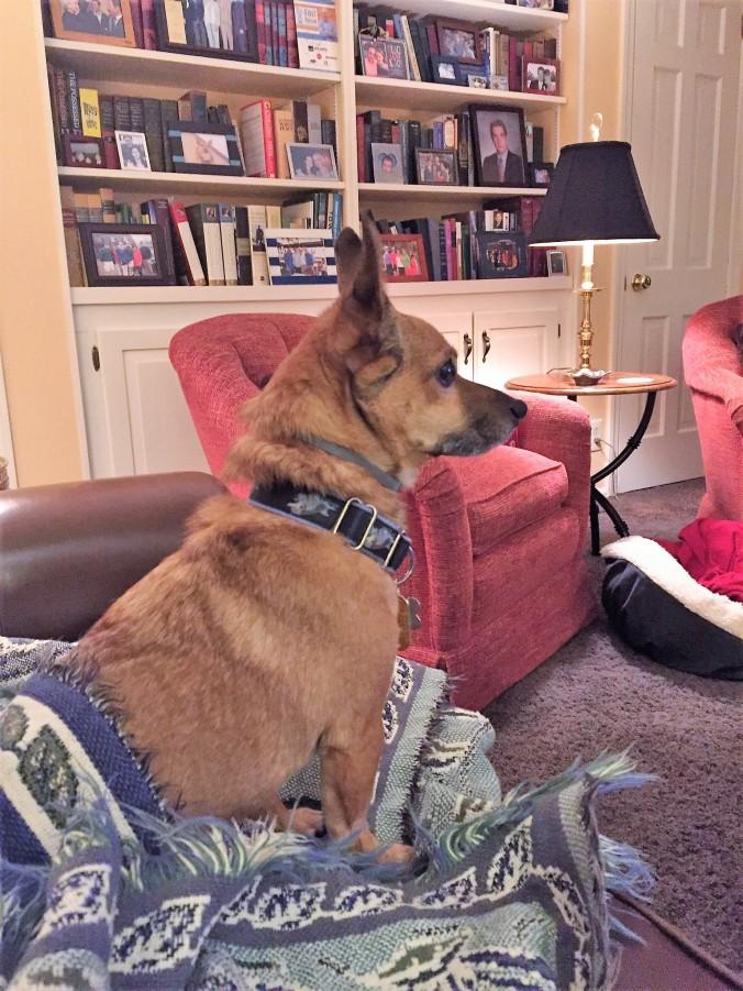 Rusty Watching the news